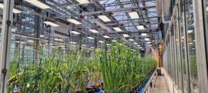 NPPC horticultural light Kroptek