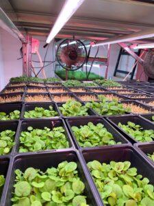 Wesh Grow Microgreens for Michelin-starred Restaurants
