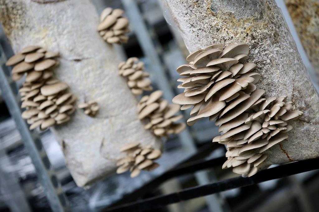 La boite a champignon