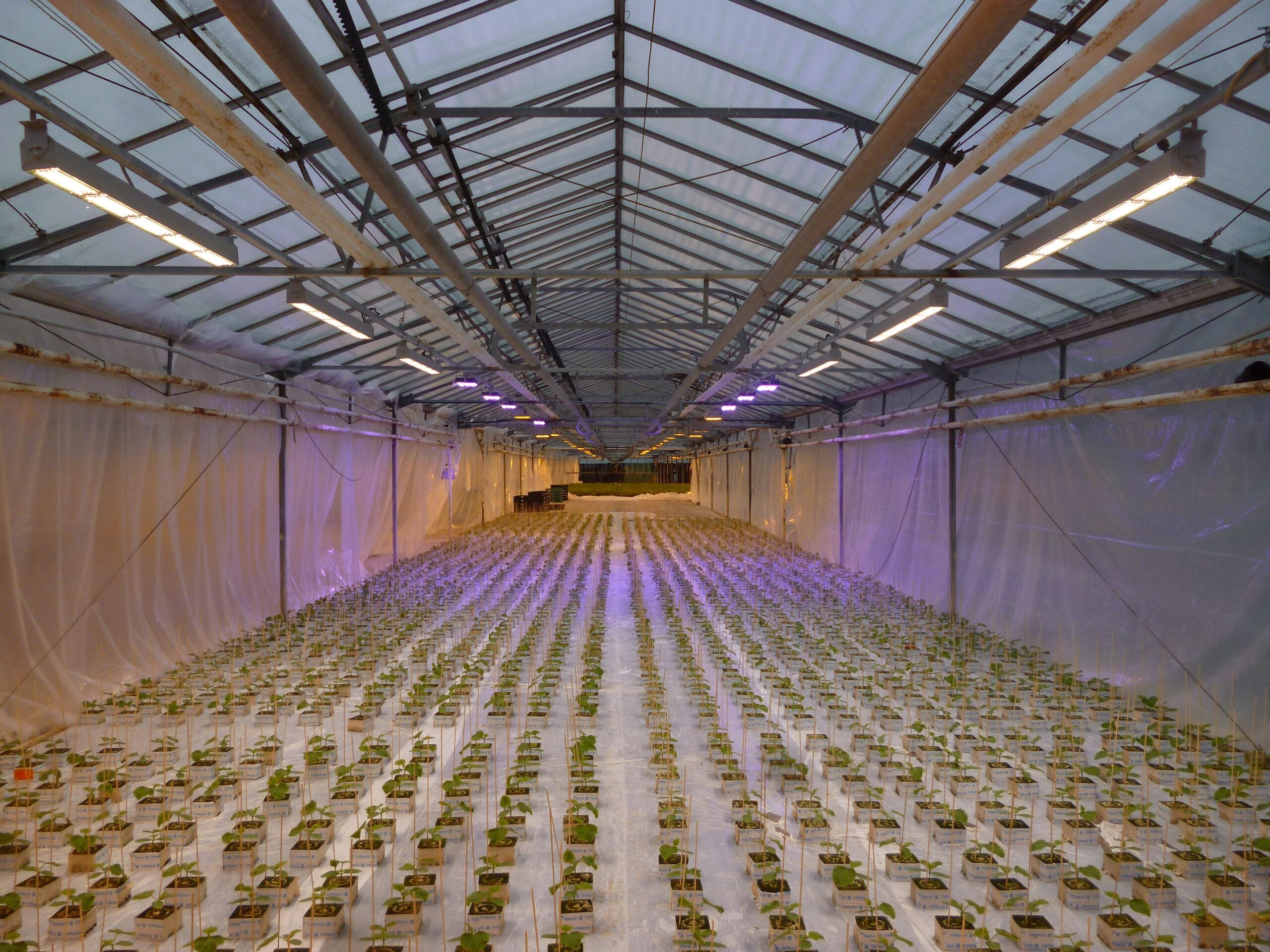 HPS to LED lights transition