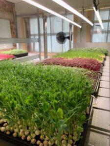 Lightfoot's Farm microgreen LED lights indoor growing